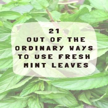 21 Out Of The Ordinary Ways To Use Fresh Mint Leaves 21 Out Of The Ordinary Ways To Use Fresh Mint