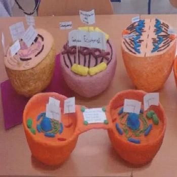 Nature   mitosis maquetas, mitosis and meiosis study guides, onion root tip mitosis, mitosis y meio