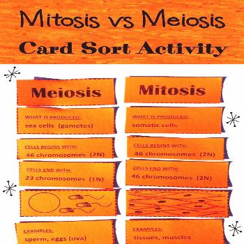 Space and astronomy   meiosis vs mitosis, cell mitosis, cytokinesis mitosis, metafase mitosis, mito